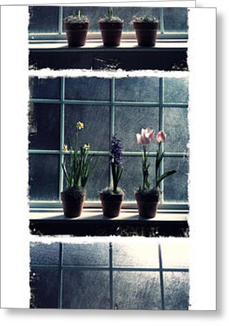 Window Of Life Greeting Cards - Cycle of Life Greeting Card by Tamara Gentuso