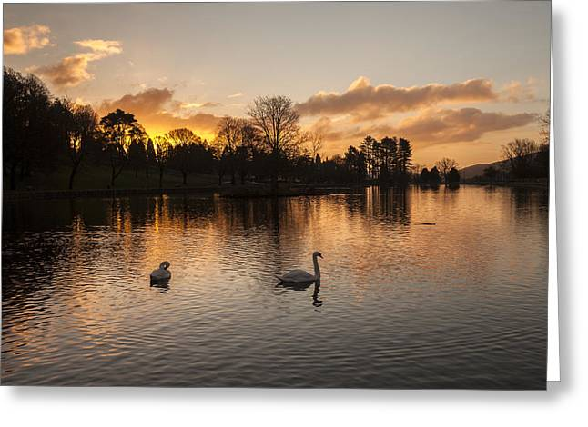 Swans At Dawn Greeting Cards - Cyfarthfa Park Lake Greeting Card by Paul Davies