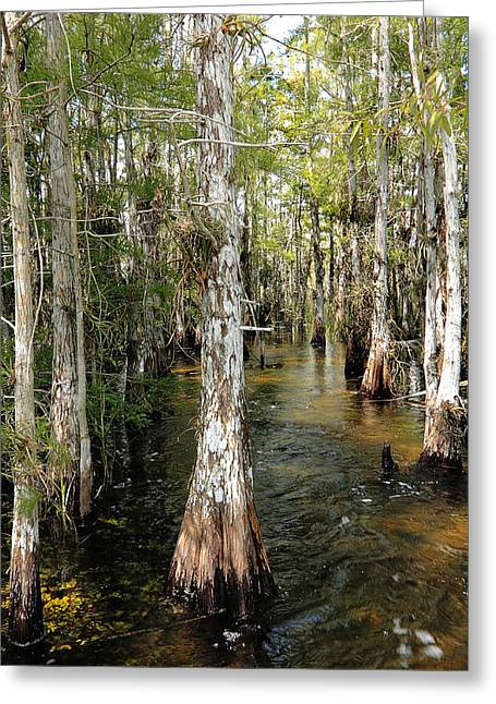 Mystic Lakes Greeting Cards - Cypres Swamp-1 Greeting Card by Rudy Umans