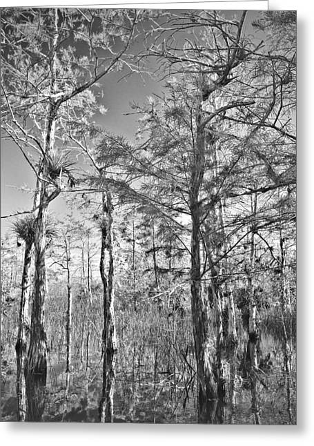 Mystic Lakes Greeting Cards - Cypres Trees BW Greeting Card by Rudy Umans