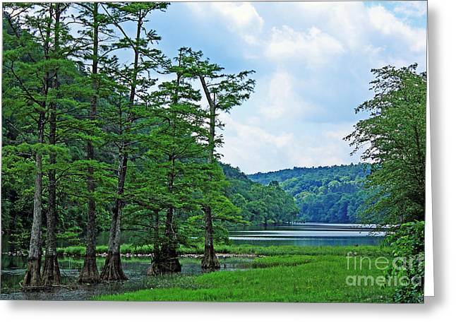 Beavers Bend Park Greeting Cards - Cypress at Beavers Bend Greeting Card by Lisa Holmgreen
