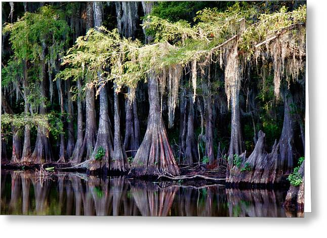 """caddo Lake"" Greeting Cards - Cypress Bank Greeting Card by Lana Trussell"