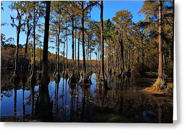 Tannic Acid Greeting Cards - Cypress Colors Greeting Card by Laura Ragland