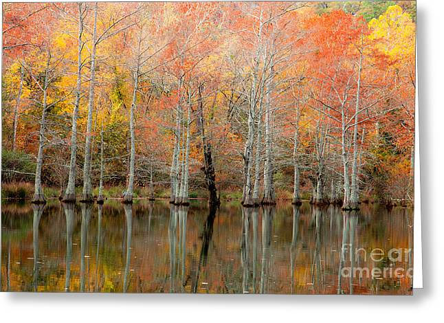 Beavers Bend Park Greeting Cards - Cypress Forest in Fall Greeting Card by Iris Greenwell