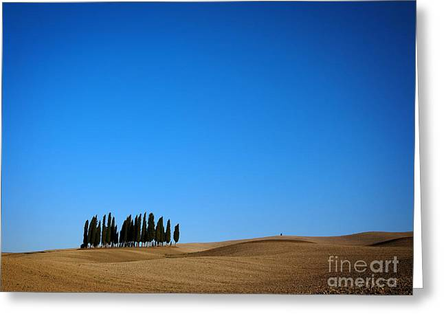 Chianti Hills Greeting Cards - Cypress forest in the barren rolling hills of Tuscany Greeting Card by IPics Photography