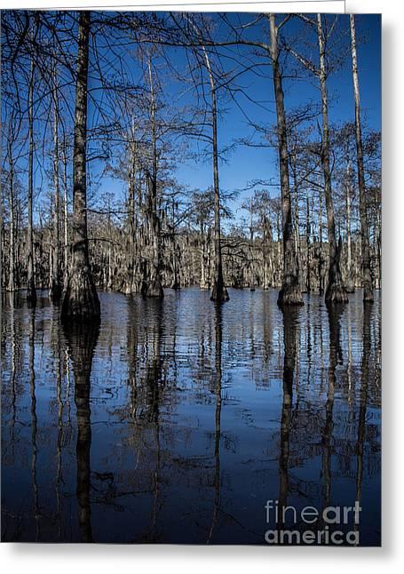 Arkansas Greeting Cards - Cypress Grove Greeting Card by Jim McCain