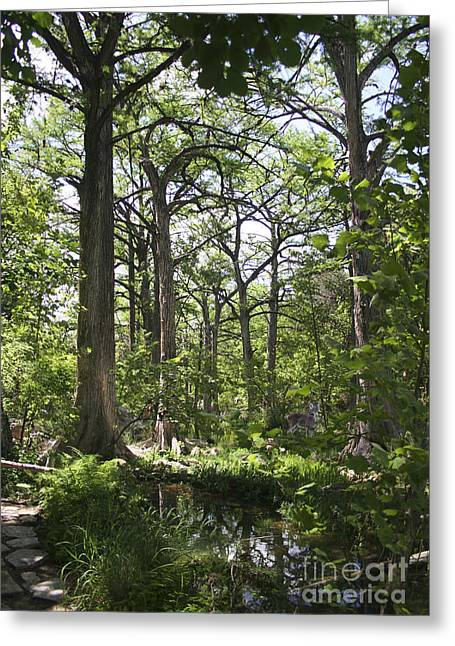 Recently Sold -  - Randy Greeting Cards - Cypress Grove Greeting Card by Randy Smith