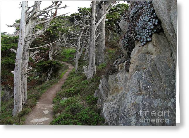 Point Lobos State Greeting Cards - Cypress Grove Trail Greeting Card by James B Toy