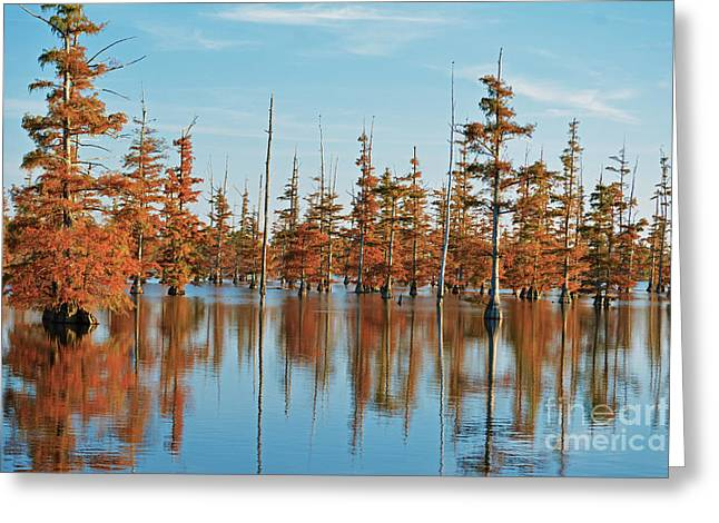 Arkansas Greeting Cards - Cypress in the Fall Greeting Card by Kevin Pugh