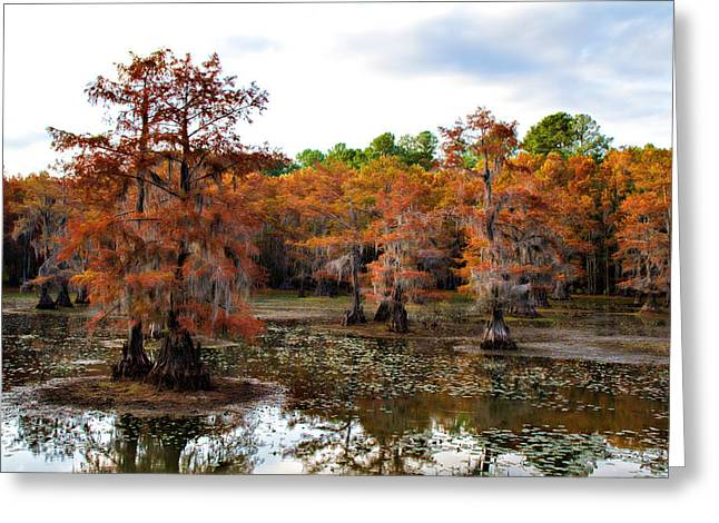 Saw Greeting Cards - Cypress Isles Greeting Card by Lana Trussell