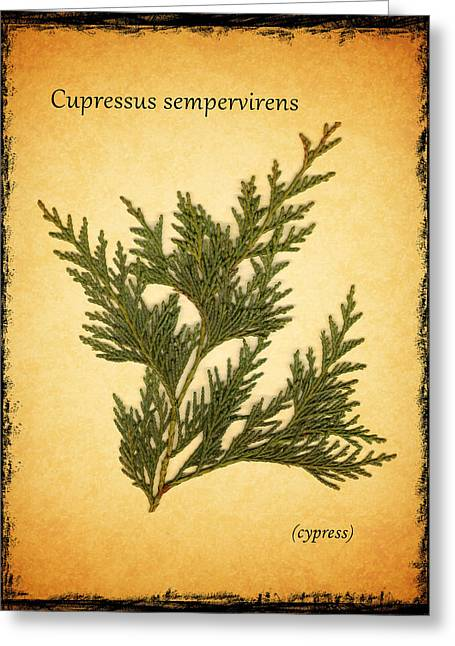 Cypress Trees Greeting Cards - Cypress Greeting Card by Mark Rogan