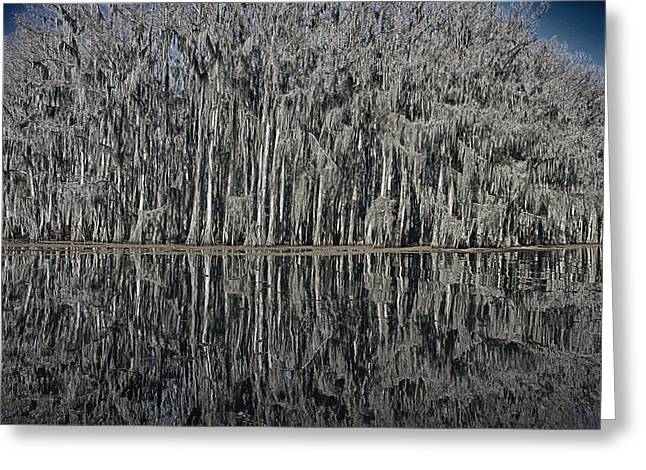 Winter Scenes Rural Scenes Greeting Cards - Cypress Reflections at Caddo Lake Greeting Card by Mary Lee Dereske