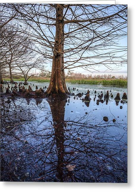 Foggy Beach Greeting Cards - Cypress Reflections Greeting Card by Debra and Dave Vanderlaan