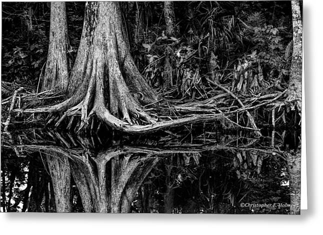 Tree Roots Photographs Greeting Cards - Cypress Roots - BW Greeting Card by Christopher Holmes