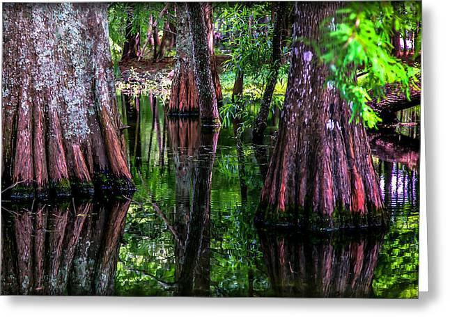 Water Garden Greeting Cards - Cypress Secrets Greeting Card by Karen Wiles