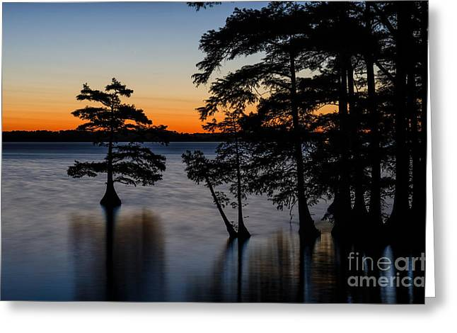 Reelfoot Lake Greeting Cards - Cypress silhouettes Greeting Card by Anthony Heflin