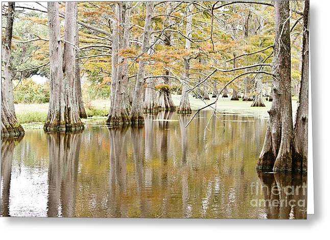 Sloughs Greeting Cards - Cypress Slough Greeting Card by Scott Pellegrin
