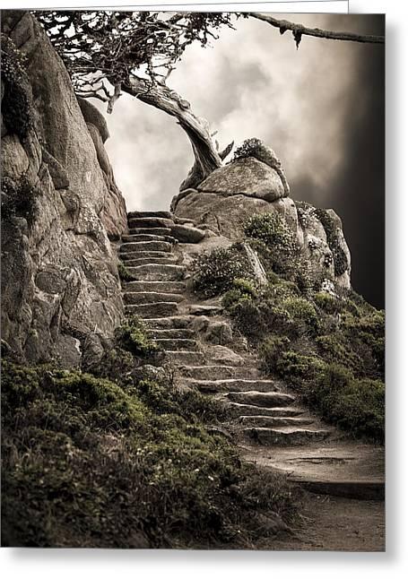 Point Lobos Greeting Cards - Cypress Steps Greeting Card by Jason Sinn