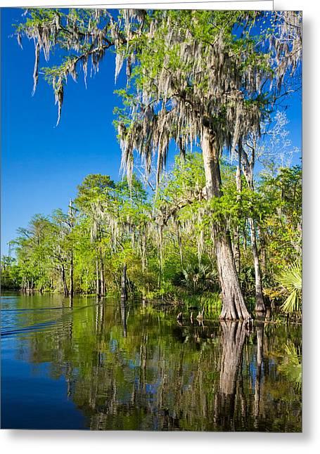 Moss Green Greeting Cards - Cypress Swamp 2 Greeting Card by Steve Harrington