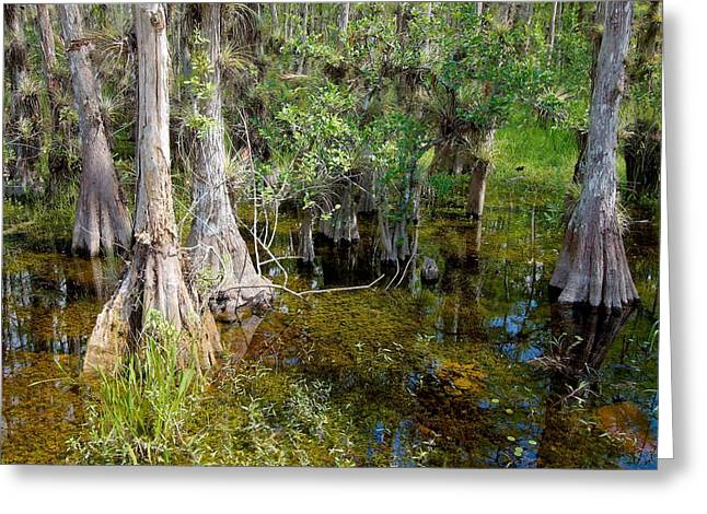 Mystic Lakes Greeting Cards - Cypress Swamp-3 Greeting Card by Rudy Umans