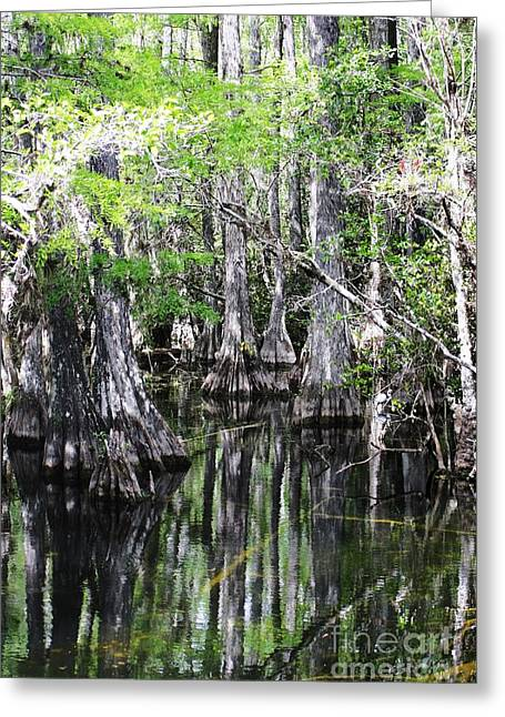Reflecting Water Greeting Cards - Cypress Swamp Greeting Card by Chuck  Hicks