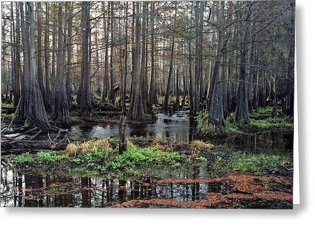 Chris Kusik Greeting Cards - Cypress Swamp I. Jane Green Creek. Greeting Card by Chris  Kusik