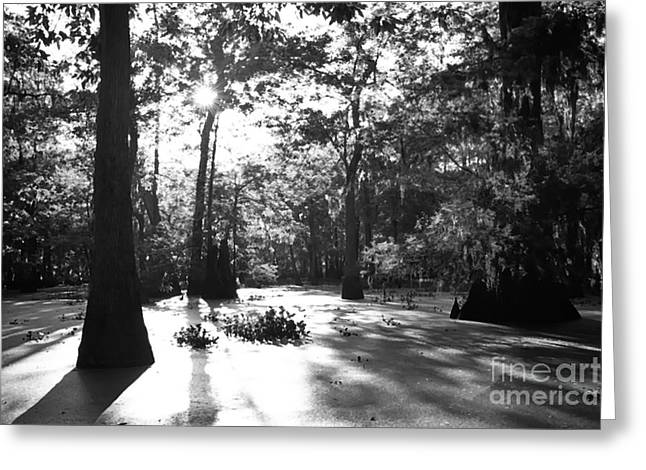 Acadian Greeting Cards - Cypress Swamp Morning Greeting Card by Thomas R Fletcher