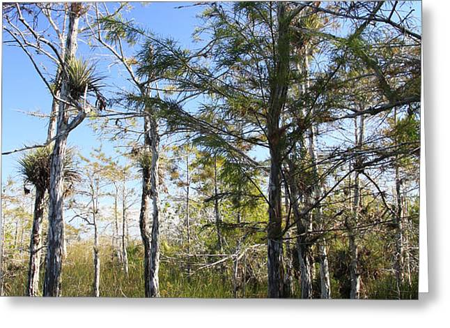 Cypress Swamp Greeting Card by Rudy Umans