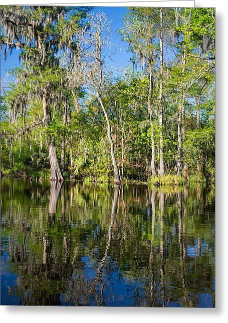 Moss Green Greeting Cards - Cypress Swamp Greeting Card by Steve Harrington