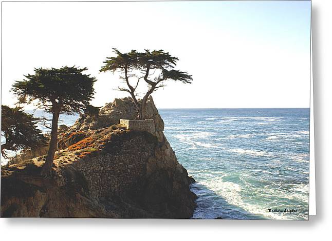 Scenes Of Pebble Beach Greeting Cards - Cypress Tree Greeting Card by Barbara Snyder