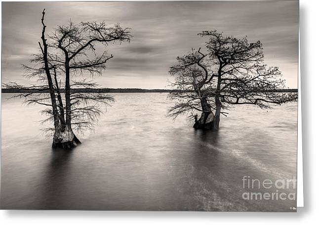Duck Dynasty Greeting Cards - Cypress Trees at Reelfoot Lake Greeting Card by Brian Stamm