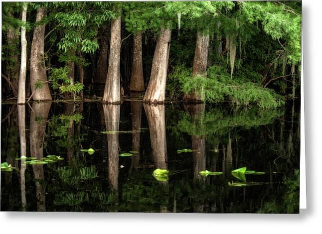 Cypress Trees In Suwanee River Greeting Card by Sheila Haddad