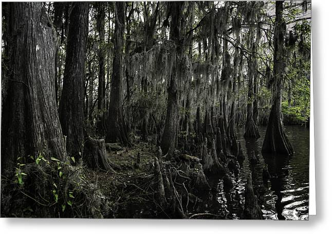 """caddo Lake"" Greeting Cards - Cypress Trees Greeting Card by John Hesley"