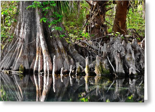 Cypress trees - Nature's Relics Greeting Card by Christine Till