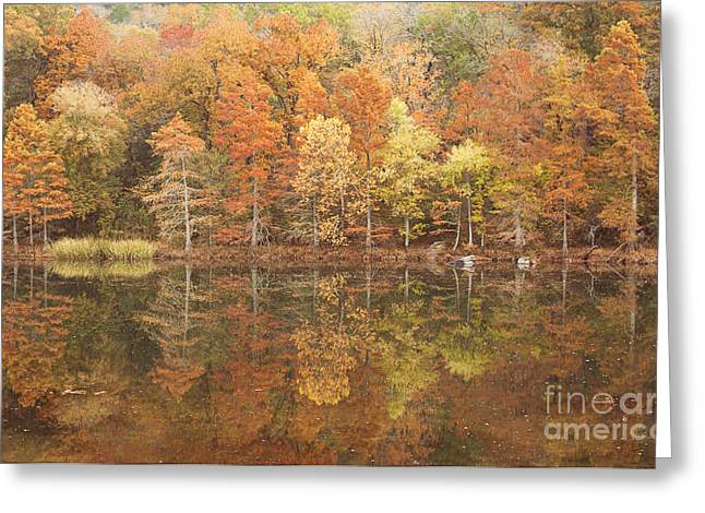 Beavers Bend Park Greeting Cards - Cypress trees Reflection Greeting Card by Iris Greenwell