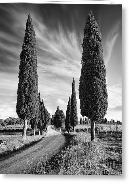 Pienza Greeting Cards - Cypress trees - Tuscany Greeting Card by Rod McLean