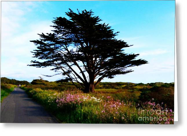 Half Moon Bay Greeting Cards - Cypress Walk Greeting Card by Avis  Noelle