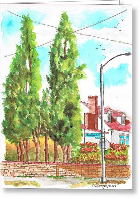 Ocre Greeting Cards - Cypresses in Massachusett Ave - Westwood - California Greeting Card by Carlos G Groppa