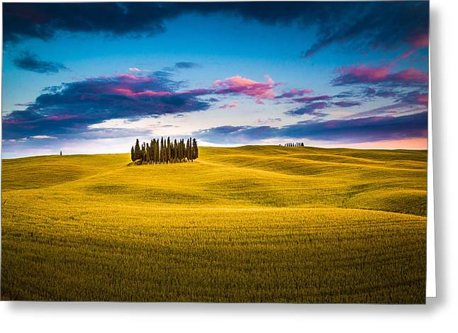 Olive Oil Greeting Cards - Cypresses Greeting Card by Stefano Termanini