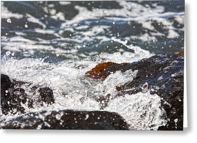 Sparkling Beach Greeting Cards - Cyrstal Water on Lava Rocks Greeting Card by Linda Phelps