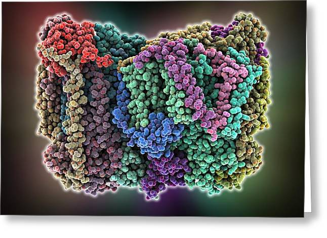 Cytochrome Greeting Cards - Cytochrome c oxidase molecule Greeting Card by Science Photo Library
