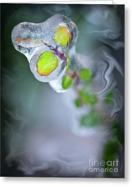 Creative Photography Pictures Greeting Cards - D E F R O S T Greeting Card by Charles Dobbs