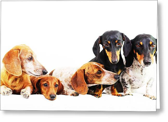 Hounddog Greeting Cards - Dachshund pack  Greeting Card by Johnny Ortez-Tibbels