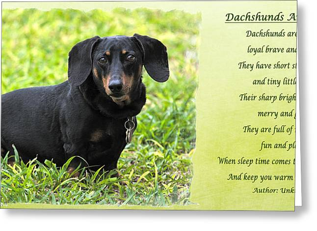 Black And Tan Dachshund Greeting Cards - Dachshunds are Speical Greeting Card by Dawn Currie