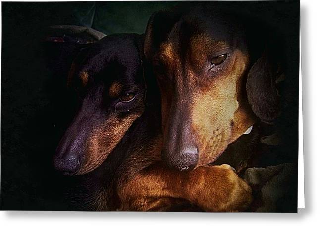 Dream Scape Greeting Cards - Dachshunds Greeting Card by Hugo Bussen