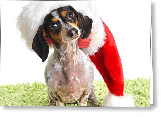Dachsund Weiner Dog In Santa Hat Greeting Card by Rebecca Brittain