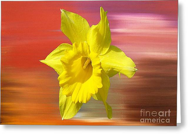 Fine Mixed Media Greeting Cards - Daffodil 2 Greeting Card by Patrick J Murphy
