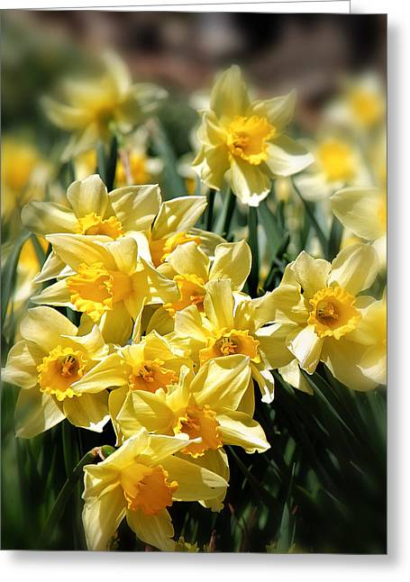 Yellow Flower Greeting Cards - Daffodil Greeting Card by Bill  Wakeley
