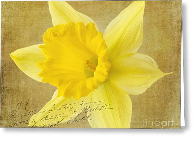 Texting Greeting Cards - Daffodil Bloom Greeting Card by Cindi Ressler