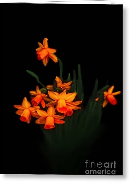 Floral Digital Art Greeting Cards - Daffodil Delight Greeting Card by Tom York Images